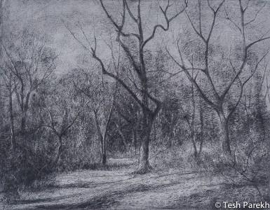 North Carolina Landscape Drawings By Raleigh Fine Artist Tesh Parekh Art